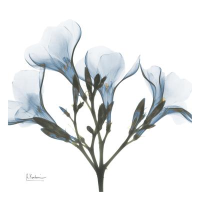 May Flowers Posters by Albert Koetsier