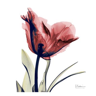 Single Tulip in Red Prints by Albert Koetsier