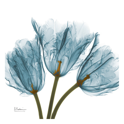 Tulips in Blue Posters by Albert Koetsier