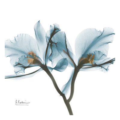 Orchids in Blue Posters af Albert Koetsier