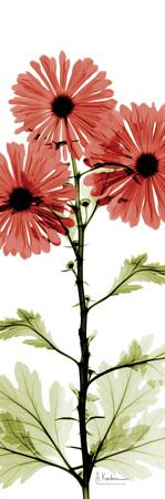 Red Chrysanthemum Trio Prints by Albert Koetsier