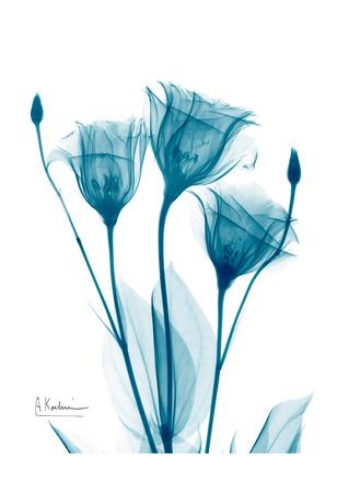 Three Gentian in Blue Prints by Albert Koetsier