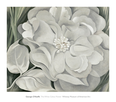 The White Calico Flower, c.1931 Posters by Georgia O'Keeffe