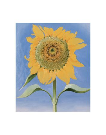 Sunflower, New Mexico, c.1935 Prints by Georgia O'Keeffe