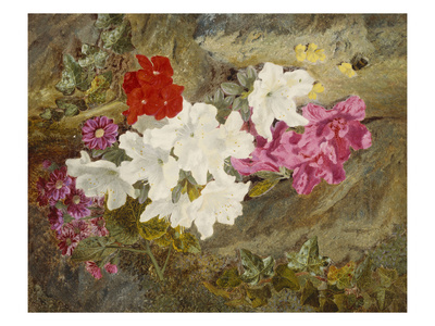 Rhododendrons with Bumble-Bee on an Ivy-Clad Ledge Premium Giclee Print by Thomas Worsey