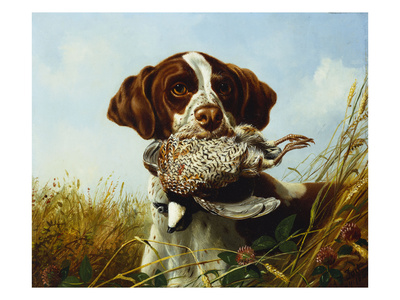 A Pointer with a Quail Amongst Clover Premium Giclee Print by Arthur Fitzwilliam Tait
