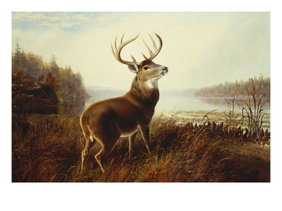A Stag by a Lake Giclee Print