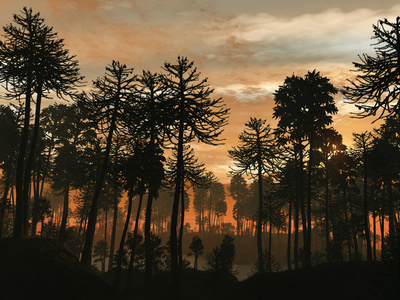 A Forest of Cordaites and Araucaria Silhouetted Against a Colorful Sunset Photographic Print by  Stocktrek Images
