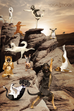 Yoga-Dogs Canyon Poster