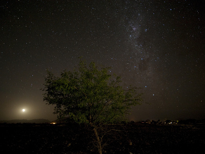 The Night Sky with a Rising Moon Behind a Tree in Sossusvlei, Namibia Photographic Print by Pete McBride