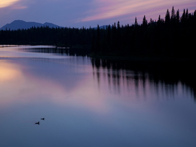 A Pair of Loons Glide on a Lake Near Aleknagik Photographic Print by Michael Melford