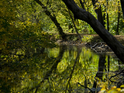 Trees Reflected in the Water of the C and O Canal Near Dickerson Photographic Print by Brian Gordon Green