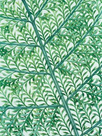 Fern leaf vein Photographic Print by Josh Westrich