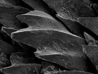 Shark Skin Scale Photographic Print
