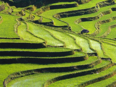 Terraced rice fields in Yunnan Province, China Fotografie-Druck
