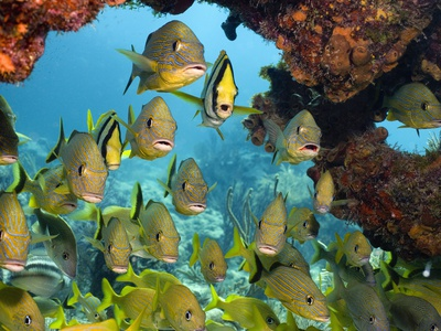 Schooling Fish Under Coral Ledge Photographic Print by Stephen Frink