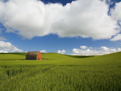 Old Red Barn in Spring Wheat Fields Photographic Print by Terry Eggers