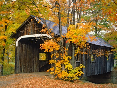 Covered Bridge and Maple Trees Photographic Print by James Randklev