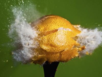 Lemon Aid Photographic Print by Alan Sailer