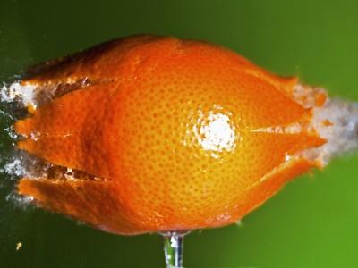 Breaking Tangerine Photographic Print by Alan Sailer