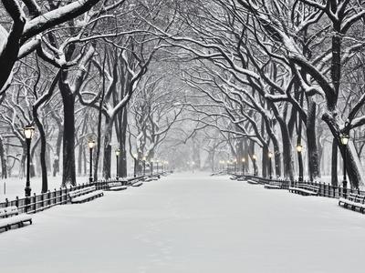Central Park v zimě Fotografická reprodukce