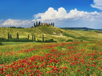 Farmhouse with Cypresses and Poppies Fotografie-Druck