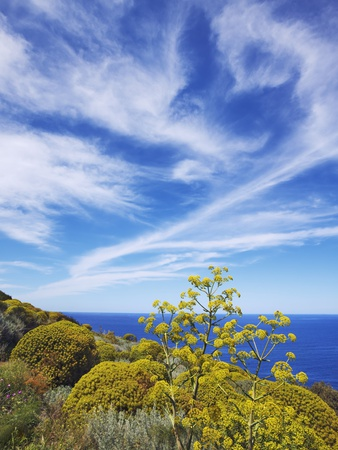 Giant fennel and tree spurge on Stromboli Island Photographic Print by Frank Krahmer