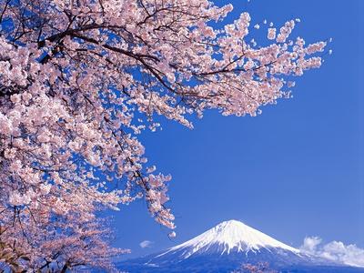 Sakura folklore japonés