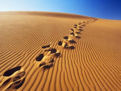 Footprints in desert Photographic Print by Frank Krahmer