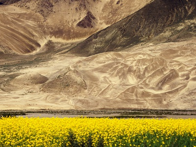 Oilseed Rape Plants Blooming at Foot of Mountain Photographic Print by Yang Liu