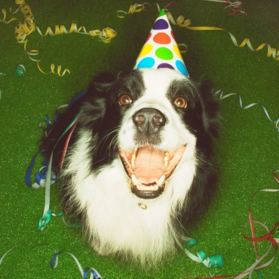 Dog Wearing Party Hat Photographic Print by Leland Bobbé
