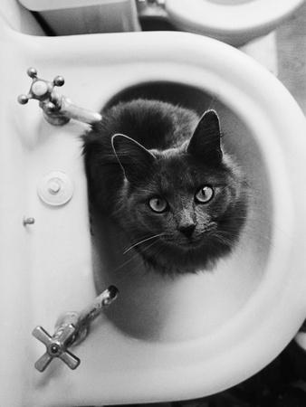 Cat Sitting In Bathroom Sink Fotografie-Druck von Natalie Fobes
