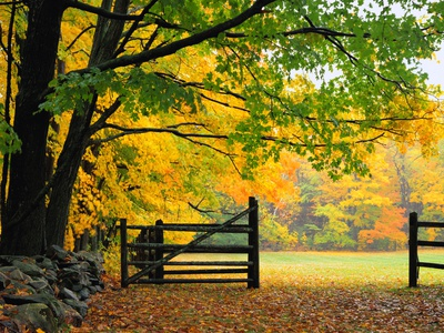 Fall Foliage Surrounds an Open Gate Photographic Print by Kathleen Brown