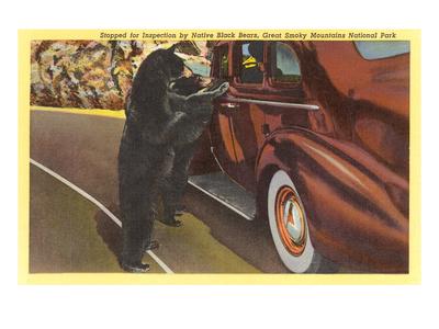 Bears at Car, Smoky Mountains, North Carolina Posters