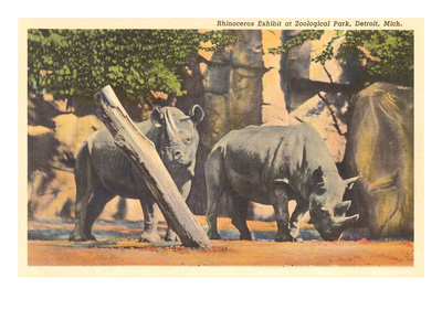 Rhinoceros at Zoo, Detroit, Michigan Prints
