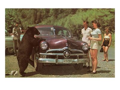 Tourists Watching Black Bear Art