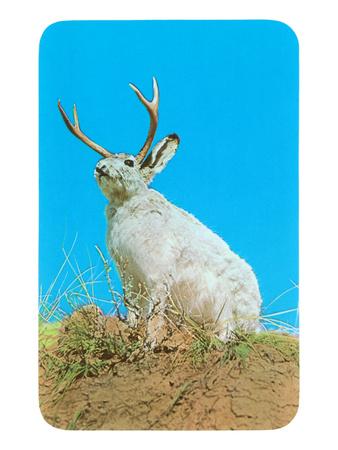 Jackalope, Horned Rabbit Posters