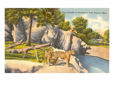 Tigers in Zoo, Detroit, Michigan Posters