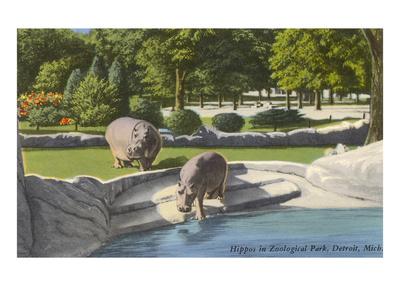 Hippopotamus in Zoo, Detroit, Michigan Art