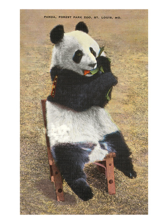 Panda, Forest Park Zoo, St. Louis, Missouri Prints