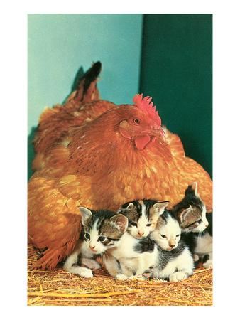 Hen Sitting on Kittens Print