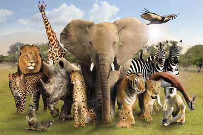 Wild World Posters