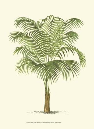 Coastal Palm III Prints