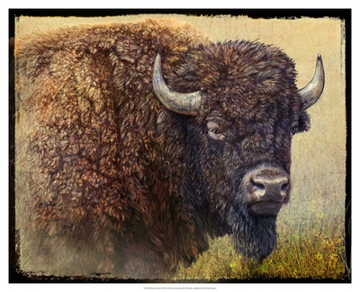 Bison Portrait I Reproduction d'art
