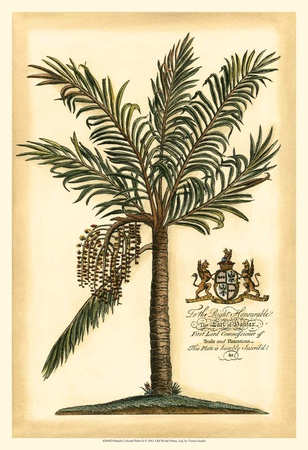 British Colonial Palm II Plakater