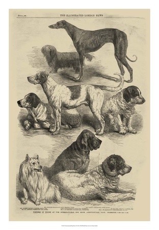 International Dog Show I Art Print