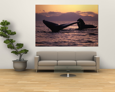 Humpback Whale at Sunset, Inside Passage, Alaska, USA Posters by Stuart Westmoreland