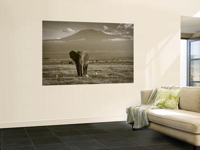 Elephant, Mt. Kilimanjaro, Masai Mara National Park, Kenya Prints by Peter Adams