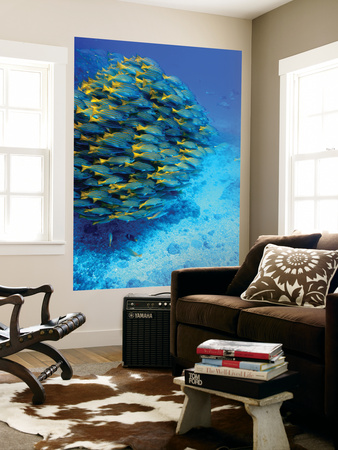 School of Colourful Fish in Blue Waters Off Isla De Cano Prints by Johnny Haglund