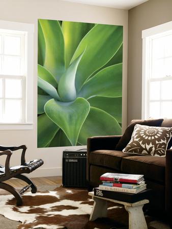 Green Succulent Plant at Botanical Gardens Prints by Sabrina Dalbesio